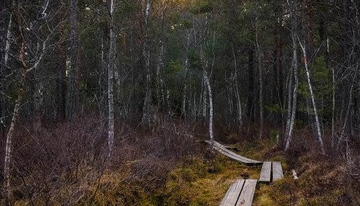 Boardwalk Path West Sweden Singletrack